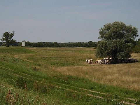 2008-07-25-1200.jpg