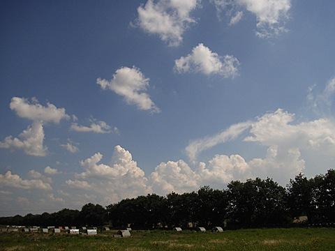 2008-07-26-1455.jpg
