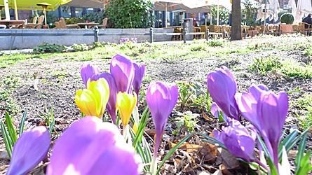 2009-03-19-1507.jpg