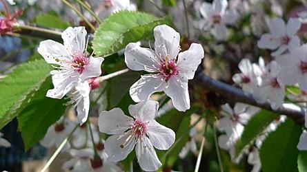 2009-04-20-1037.jpg