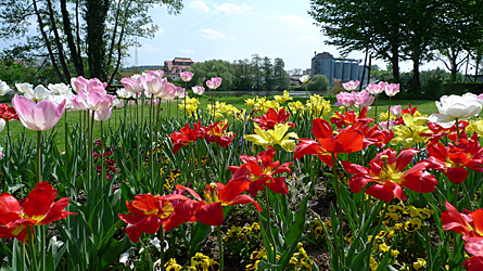 2009-04-25-1331.jpg