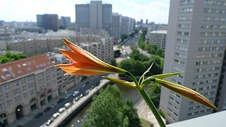 2009-06-02-1500.jpg