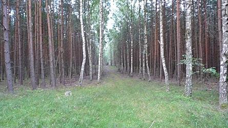 2009-08-01-2006.jpg