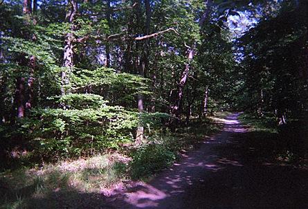 2009-08-06-1520.jpg