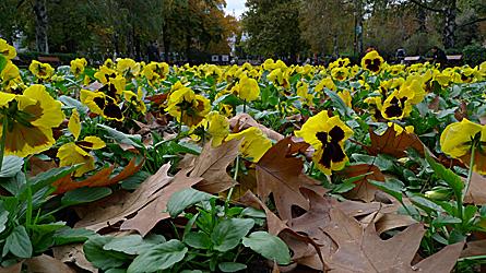 2009-10-29-1232.jpg