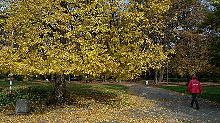 2009-10-29-1309b.jpg