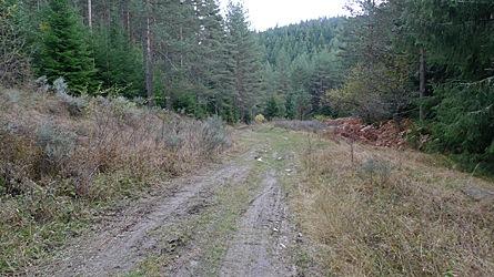 2009-10-31-1510.jpg
