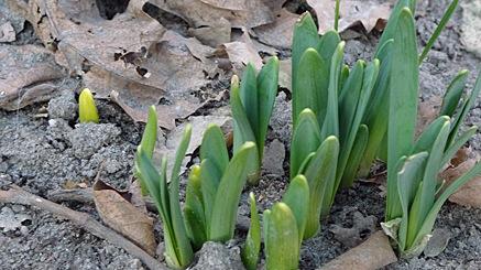 2011-03-01-1636.jpg