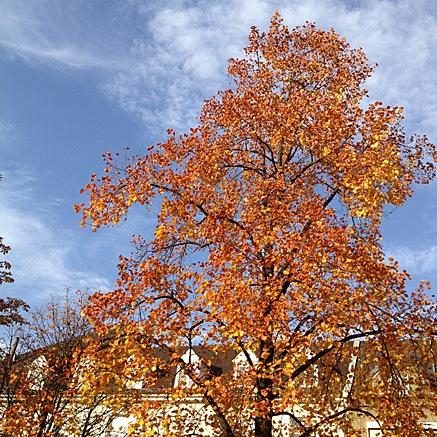 2012-10-19-1707.jpg