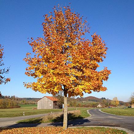 2012-10-21-1616.jpg