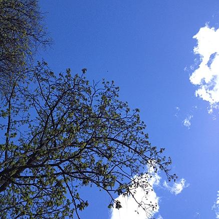 2014-04-15-1532.jpg